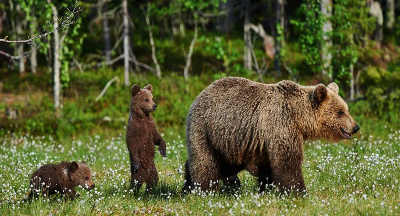 oso-pardo-bosque-acciona-2040x1100.jpg
